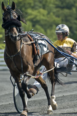 Harness Racer